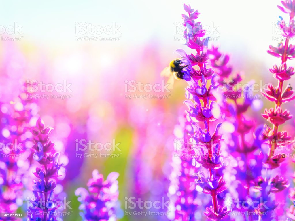 Pollination: Nature's miracle process royalty-free stock photo