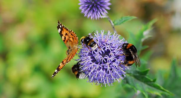 Pollination picture id115906327?b=1&k=6&m=115906327&s=612x612&w=0&h=y kd bixyzlrlixhhfz3e16mofajtcmpz ronxhsl w=