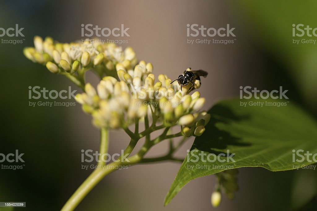 Pollination royalty-free stock photo