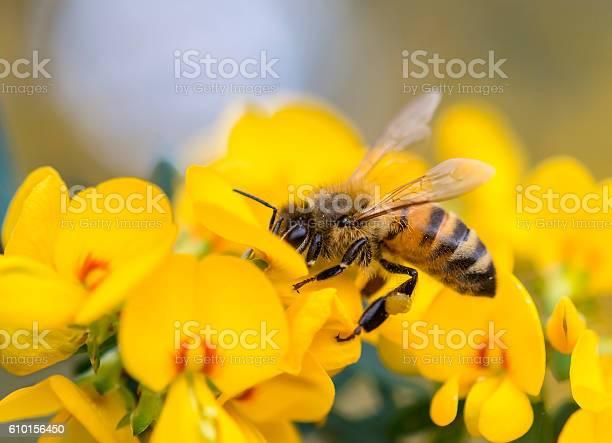 Photo of Pollination