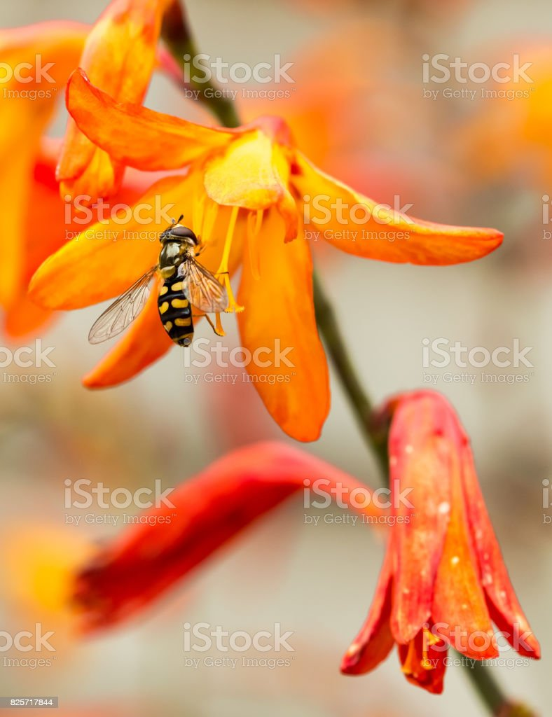 Pollinators in the garden stock photo