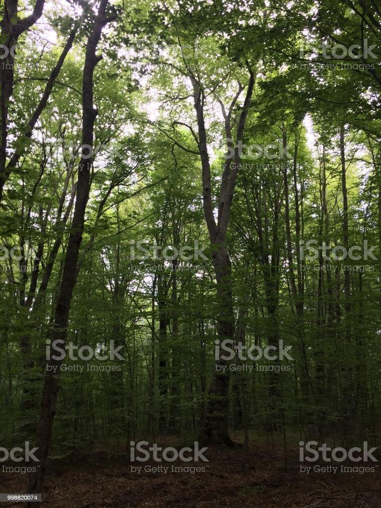 Pollino National Park - foto stock