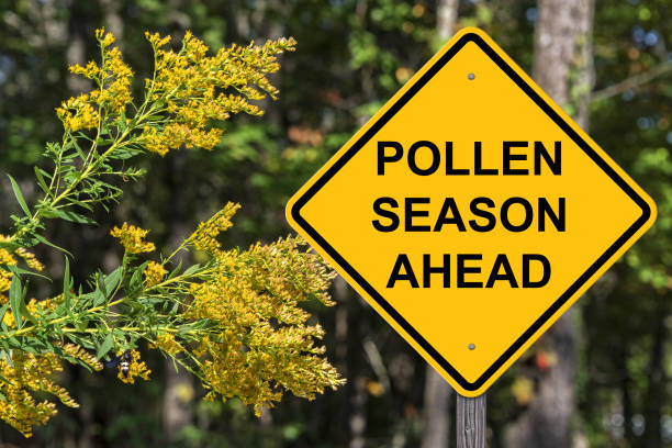 Polllen Season Ahead Warning stock photo