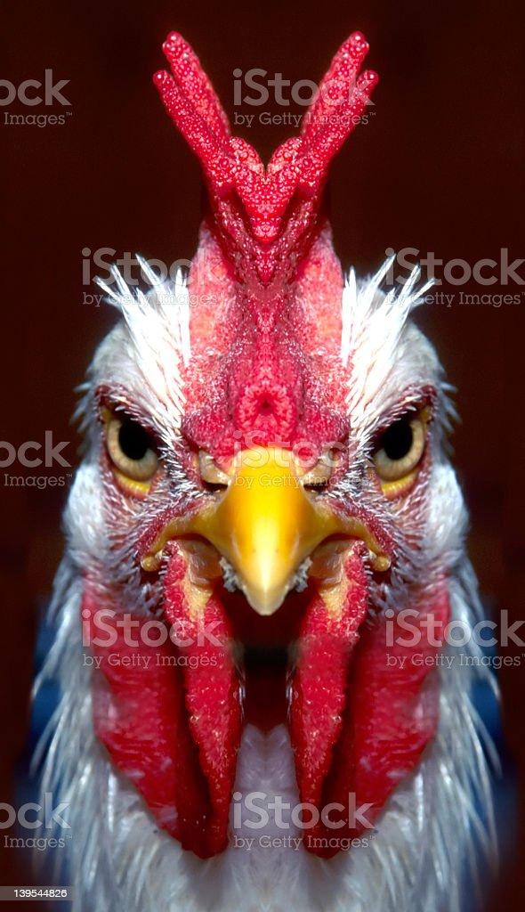 Pollo Diablo stock photo