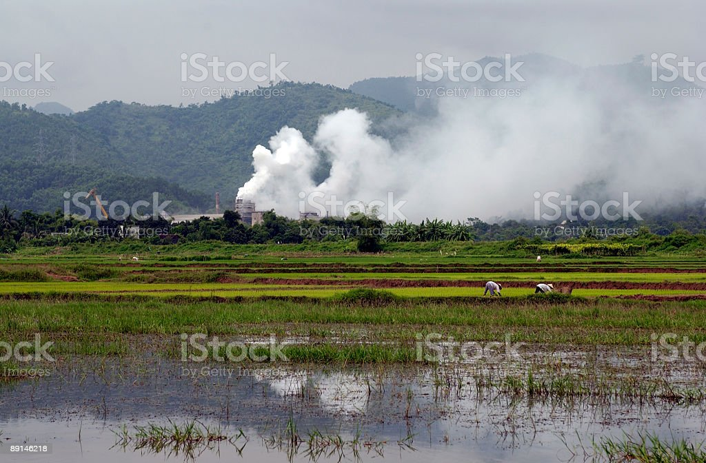 Polluted Paddies stock photo