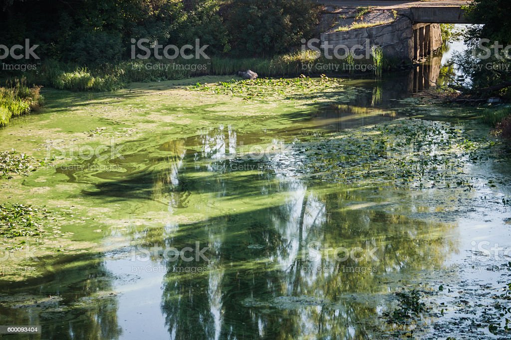 Polluted river bay stock photo