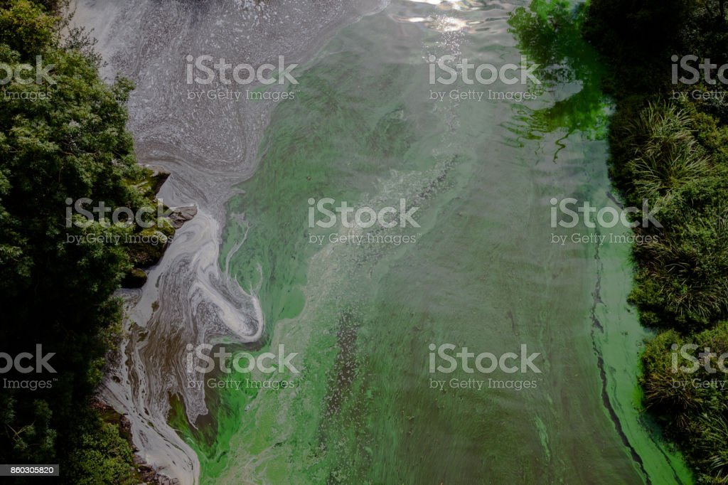 polluted river in Brittany France with green algae bloom stock photo