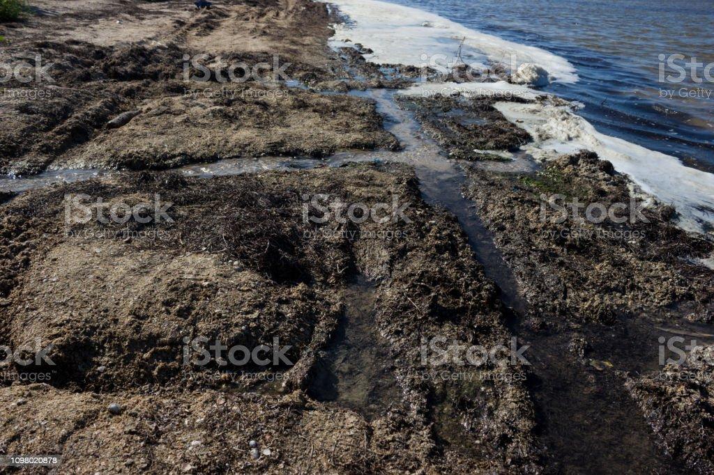 Águas poluídas costa - extinção e doença - foto de acervo