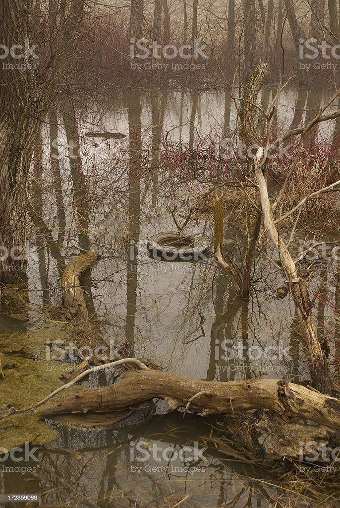 Polluted Swamp royalty-free stock photo
