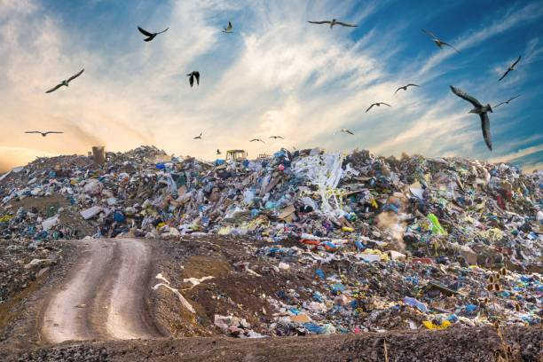 Pollution concept. Garbage pile in trash dump or landfill. Birds flying around. stock photo