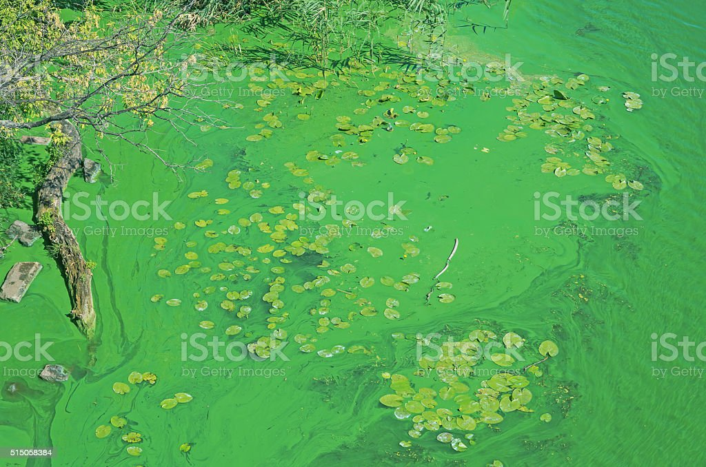 Pollution of river stock photo