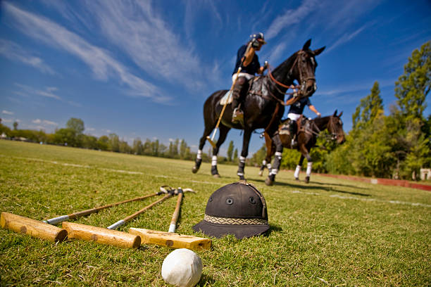 Polo Horses stock photo