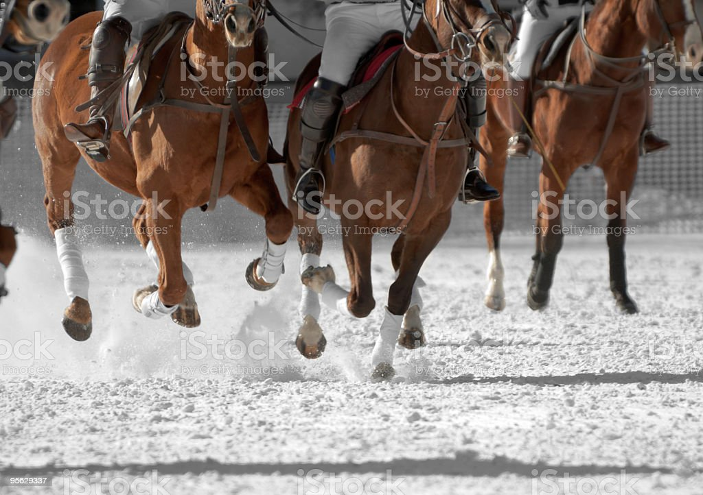 Polo horses running down the field stock photo