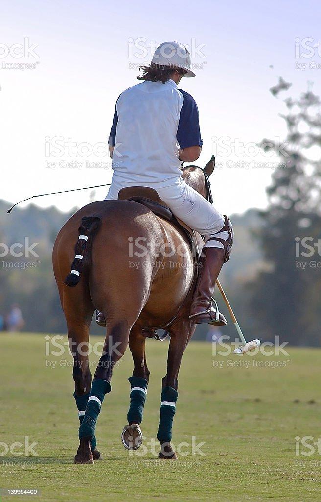 Polo rider takes a break stock photo