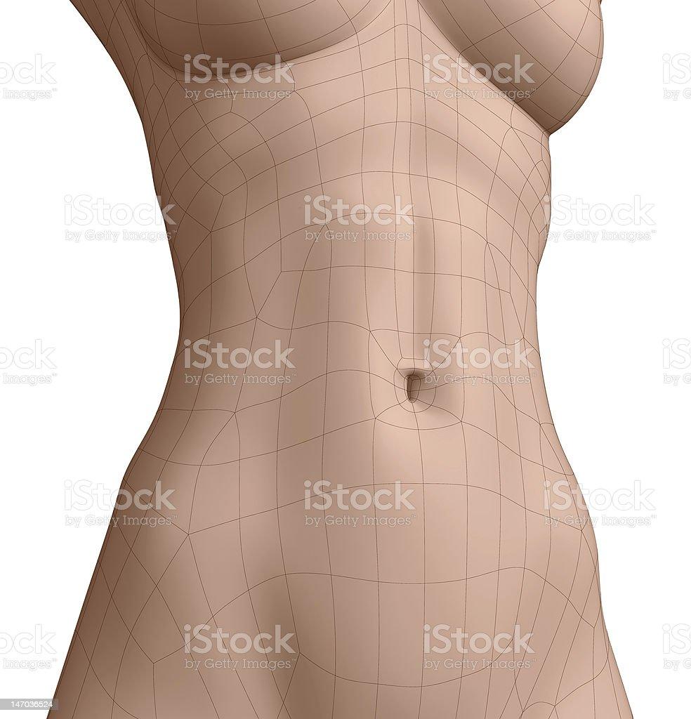 Polygonal Belly Button stock photo   iStock