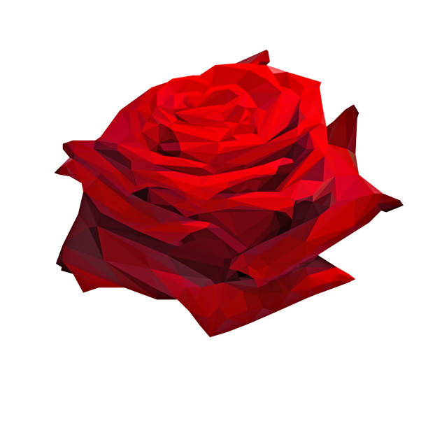 polygonal shape red rose on white background - low poly rose stock photos and pictures
