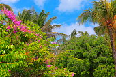 Polynesian tropical paradise relax, under shadow of coconut palm trees and flowers foliage – Hawaii islands, USA