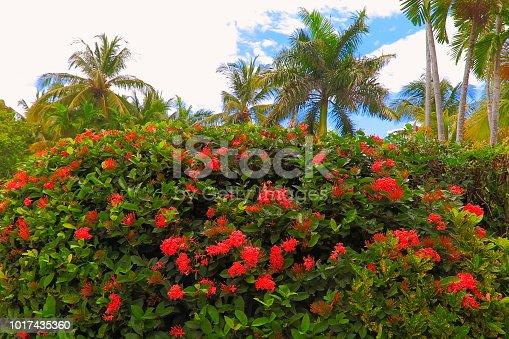 Polynesian tropical relax, under palm trees leafs foliage – Hawaii islands, USA