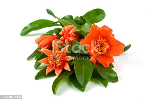 pomegranate branch with flowers isolated on white