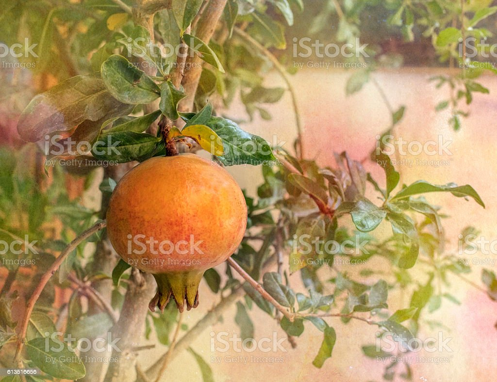 Pomegranate fruit with grainy texture for retro effect stock photo