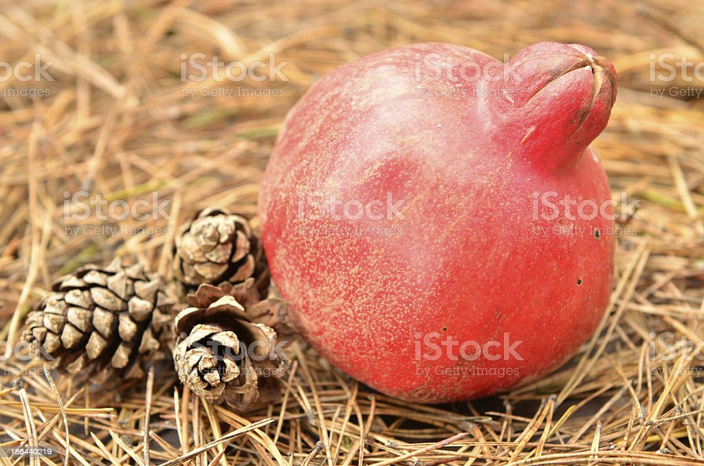pomegranate royalty-free stock photo