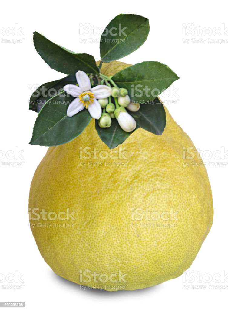 Pomelo isolated on white background - Стоковые фото Без людей роялти-фри