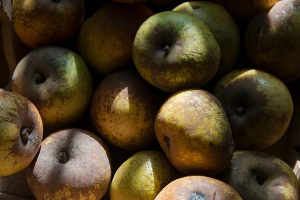 pommes reinettes – Foto
