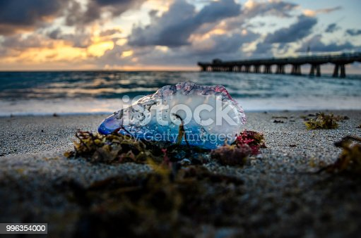 Pompano Beach, FL Pier at Sunrise with sand, surf, seaweed and man o war in the foreground and clouds with blue sky, from the Shoreline view from the north side