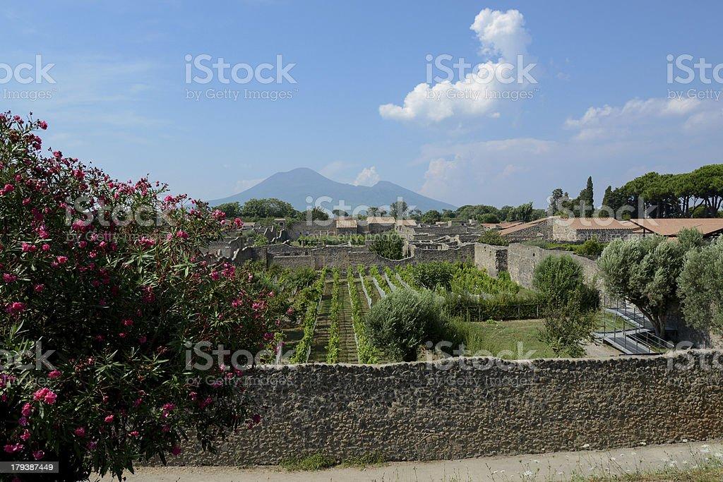 Pompeii vineyards stock photo