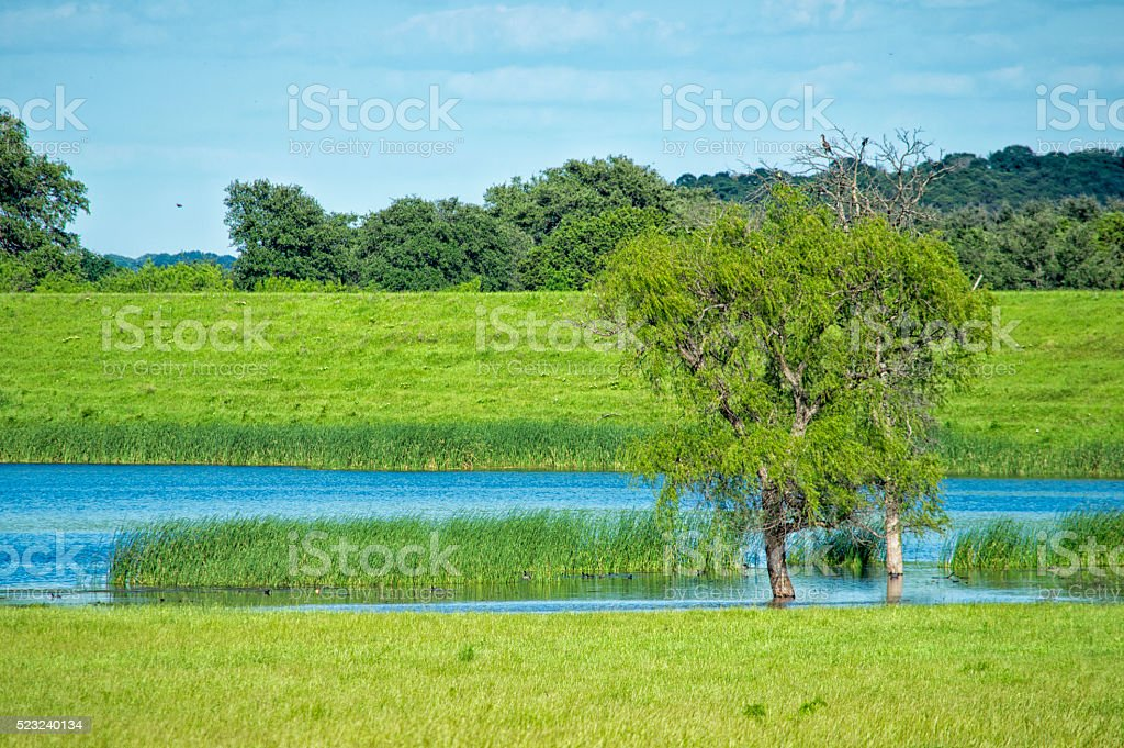 Pond and Field stock photo