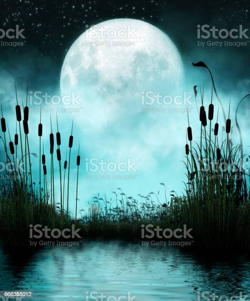 Photo of Pond and Moon at Night