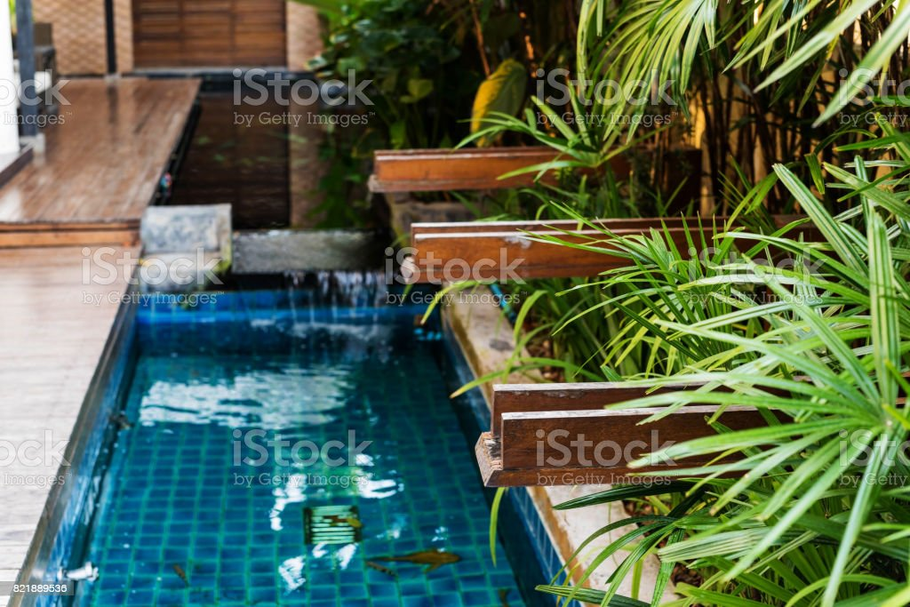 pond and plants for house interior stock photo