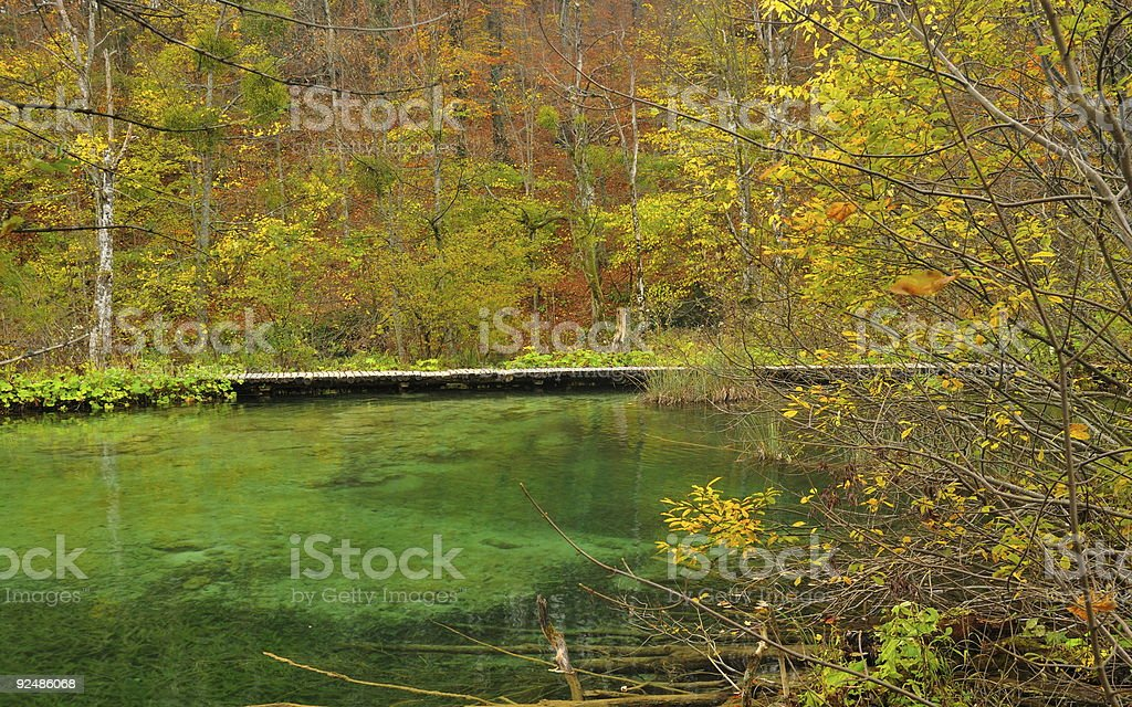 Pond and walkway in lush vegetation royalty-free stock photo