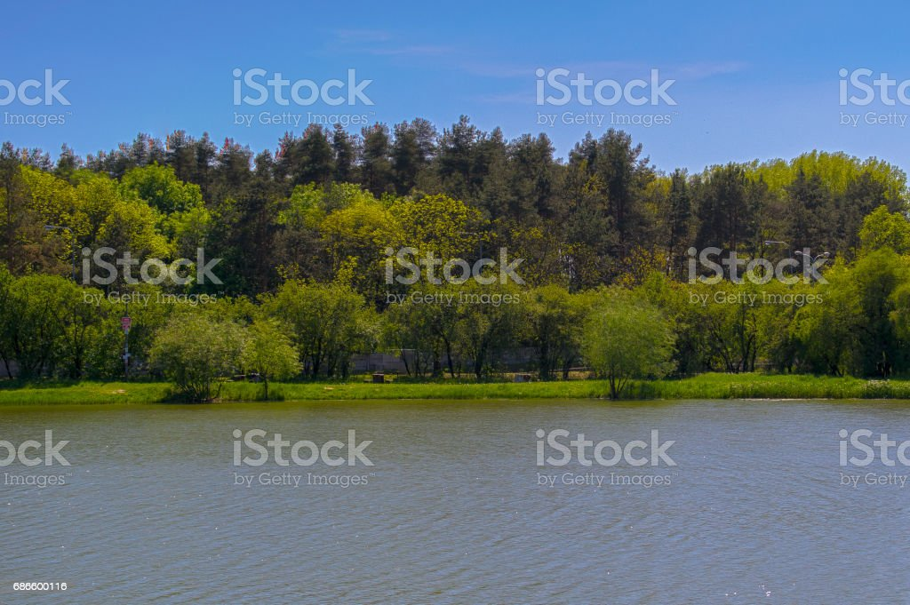 Pond as a place of rest royalty-free stock photo