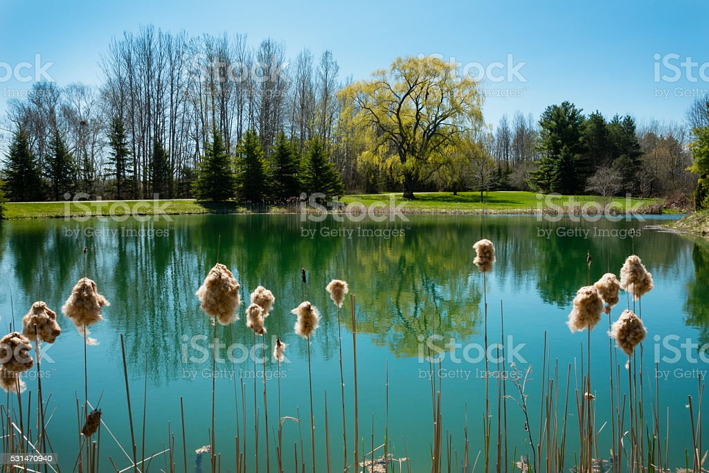Pond Comes To Life stock photo