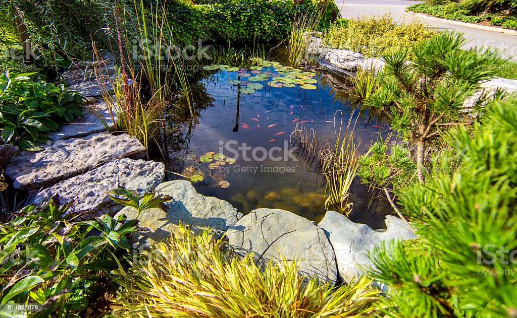 Pond in a beautiful creative lush green blooming garden stock photo