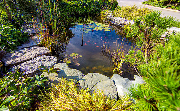 Pond in a beautiful creative lush green blooming garden - Photo