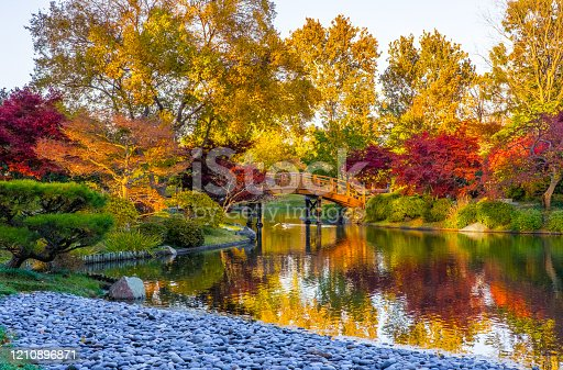 Sunset view of beautiful Japanese garden in Midwest in fall; traditional Japanese bridge in the background