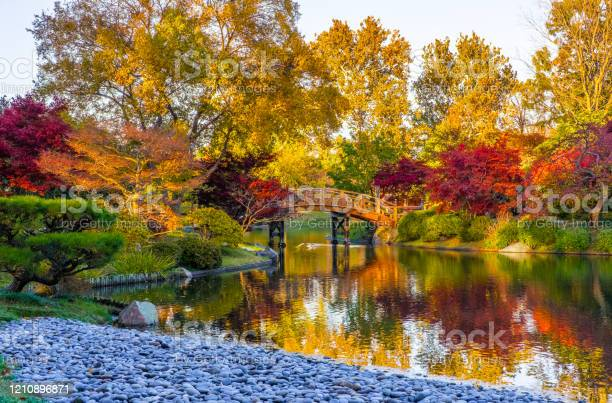 Photo of Pond in a beautiful  Japanese garden in autumn