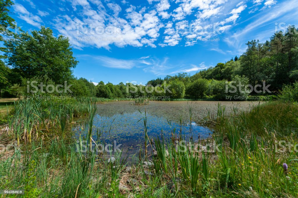 Pond in a rural setting stock photo