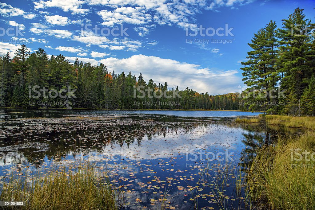 Pond in an Autumn Forest stock photo