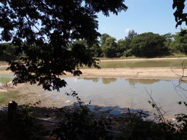 Pond in dry season stock photo