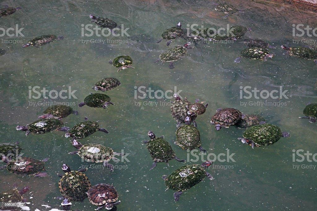 Pond in Jade Emperor Pagoda. Ho Chi Minh. Vietnam royalty-free stock photo