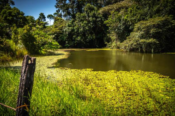 Pond in Queensland Australia stock photo