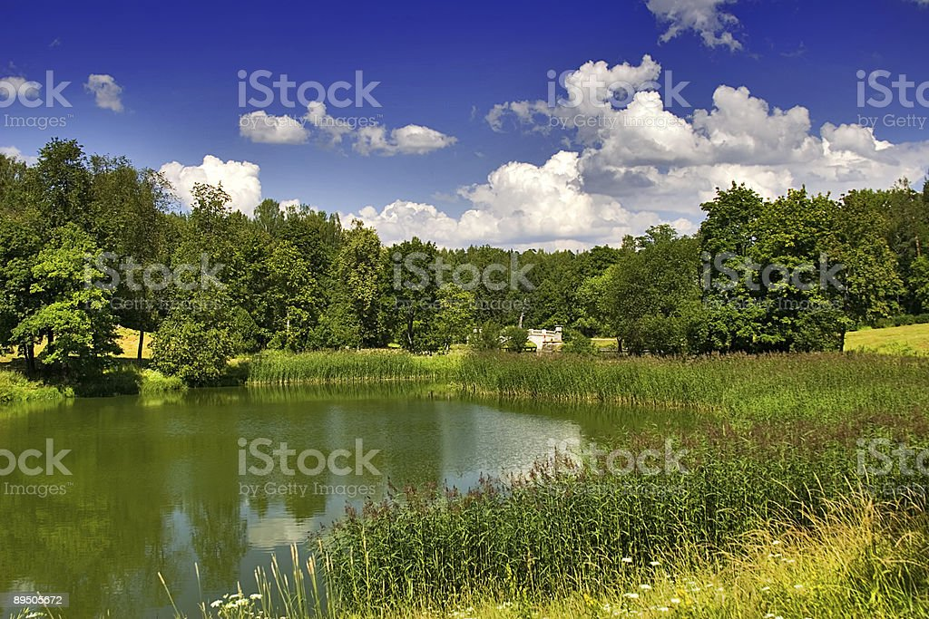 pond in summer park royalty-free stock photo