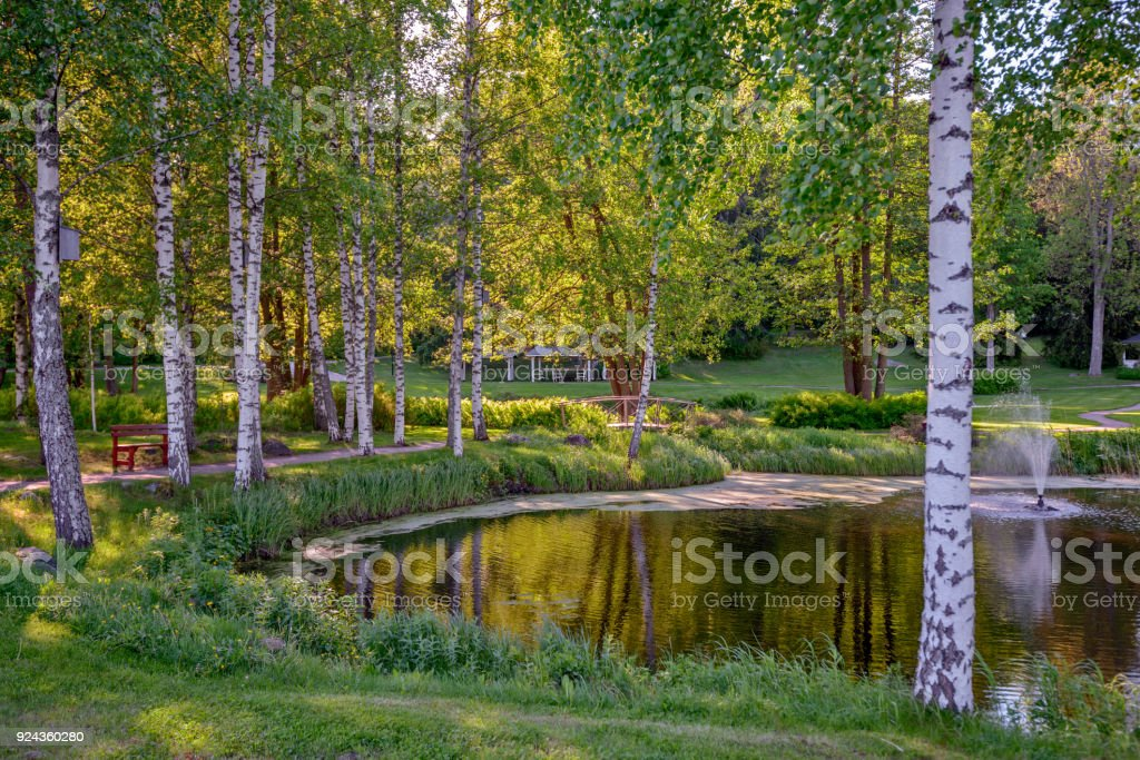 Pond in summer park stock photo