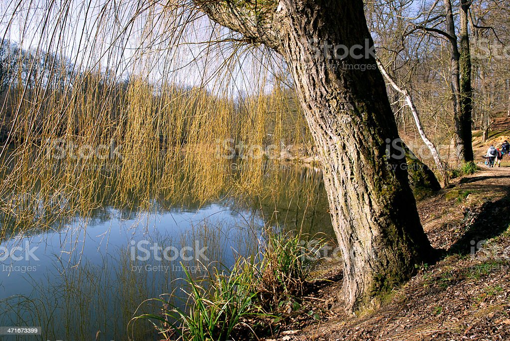 Pond in the forest royalty-free stock photo