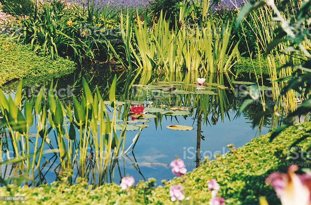 Pond in the ornamental garden royalty-free stock photo