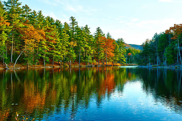 Pond in White Mountain National Forest, New Hampshire Pond in White Mountain National Forest, New Hampshire, USA. white mountains new hampshire stock pictures, royalty-free photos & images