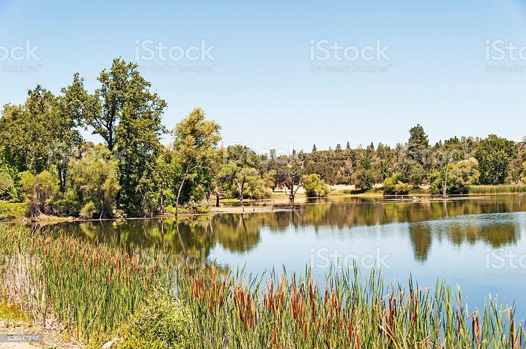 Pond near Mt Akum royalty-free stock photo